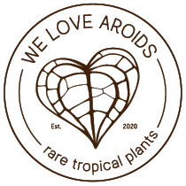 We Love Aroids